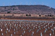 Cała prawda o energii odnawialnej: kosztuje więcej, niż przynosi korzyści