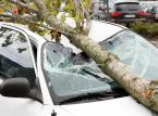 To właściciel samochodu musi wykazać, że konkretna gałąź spowodowała szkodę