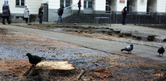 Skwer u zbiegu Nowogrodzkiej i Poznańskiej przed Urzędem Dzielnicy Śródmieście