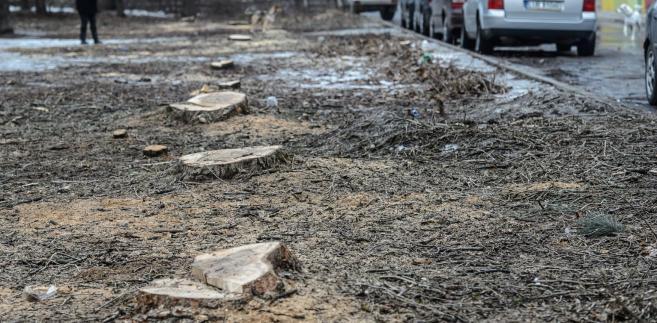 Sławomir Sowula uzmysławia, że nie tylko teren oficjalnie chroniony ma znaczenie przy wycince