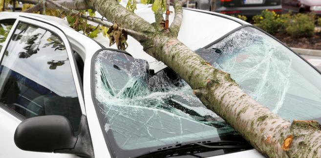 Samochód, drzewo