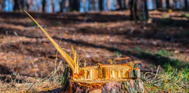Właściciel nieruchomości, chcąc dokonać wycinki drzew bądź krzewów na swojej nieruchomości, będzie musiał zgłosić to wcześniej do gminy