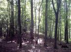 Szyszko: W Puszczy Białowieskiej trwa eksperyment porównawczy
