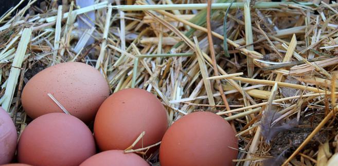 Jaja i mięso drobiowe są wymieniane jako jedno z głównych źródeł zakażenia.