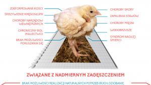 Problemy w przemysłowej hodowli