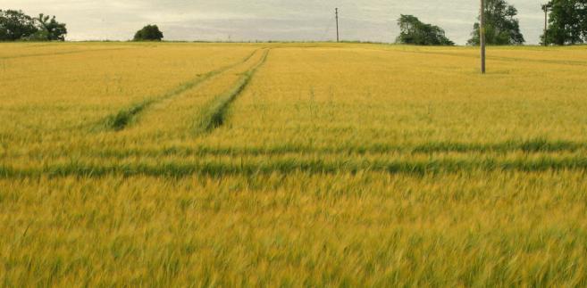 W ocenie NSA nie można pomijać, że współczesny charakter gospodarki rolnej powoduje utratę aktualności tradycyjnego rozumienia pojęcia zagrody.